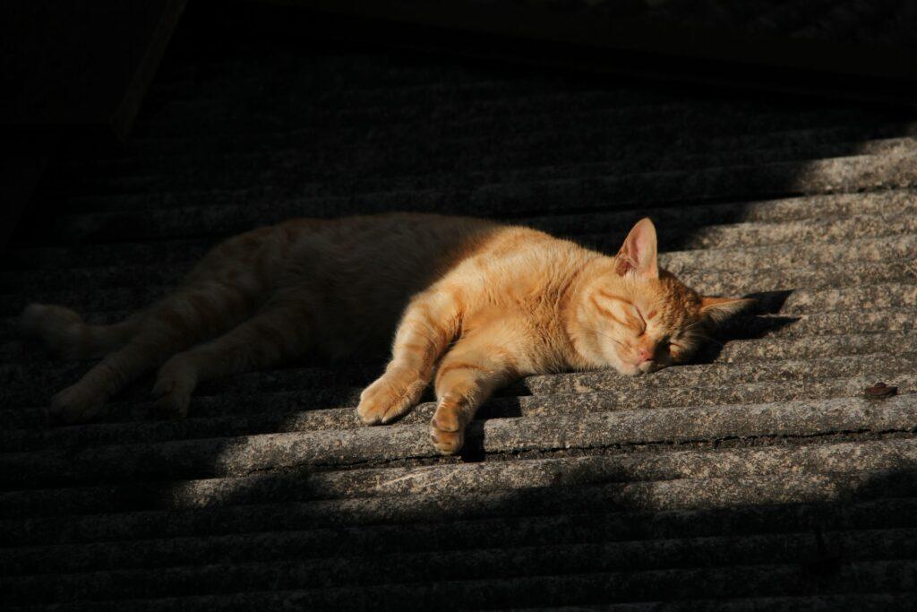 A cat asleep on the floor.